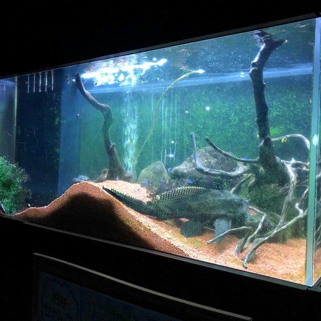 リファイン水族館 セルフィンプレコ